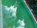EPOTEC Bondi - Mid Blue pool (BEFORE)