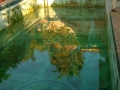 Pool in Baulkham Hill